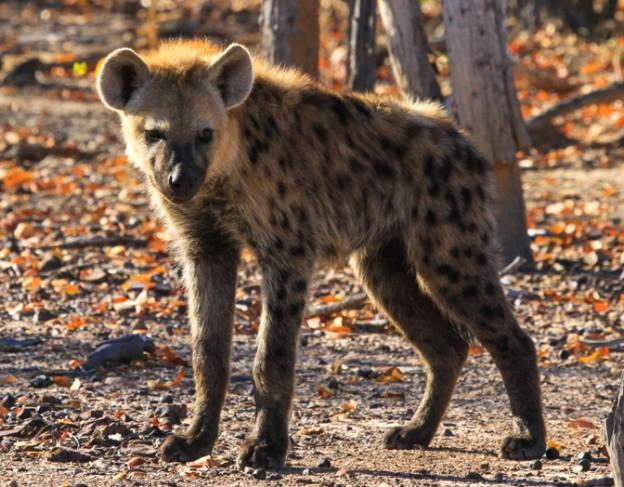 imvelo_safari_lodges_-_nehimba_-_16_of_17