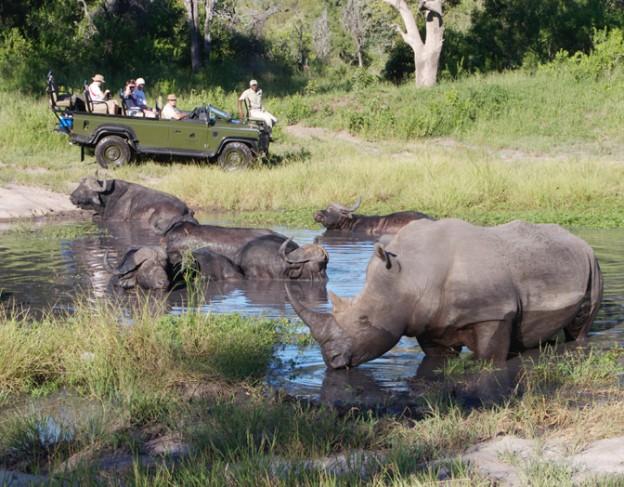 wetu buff  rhino1 elephabt plains game lodge wetu small