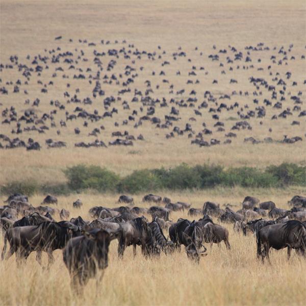 Discover Kenya & Zanzibar