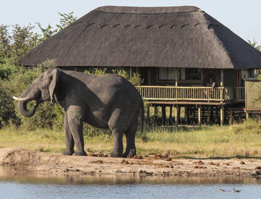imvelo_safari_lodges_-_nehimba_-_tasco_elephant_2_of_17
